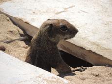 Bewohner von Fuerteventura